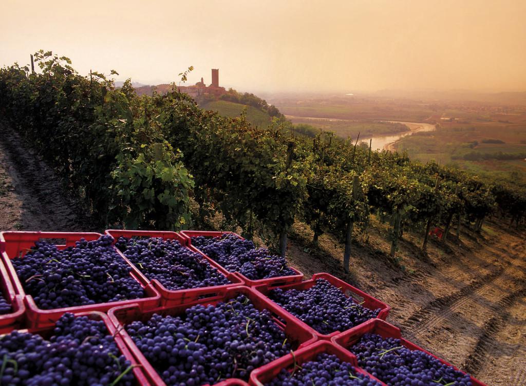 Langhe - Vista sulle vigne di Barbaresco - SiTI, Torino