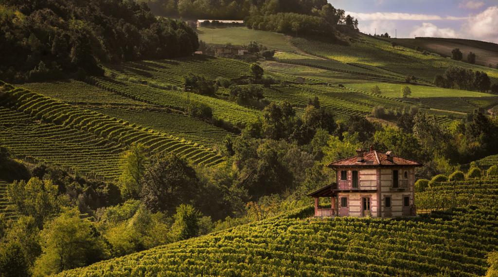 Langhe - Vista sulle vigne di Barolo - Valerio Li Vigni