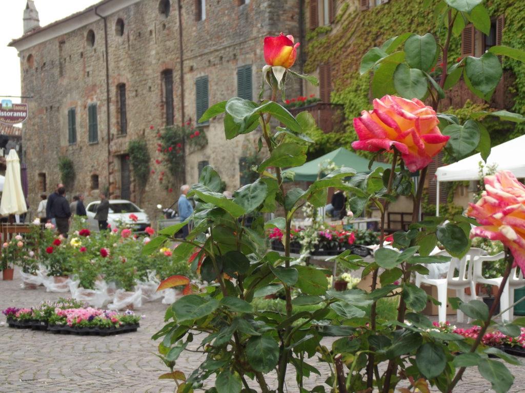 Festa della fioritura delle rose a Bossolasco