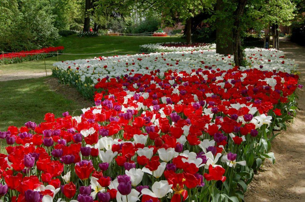 Lo spettacolo dei tulipani in fiore a Messer Tulipano