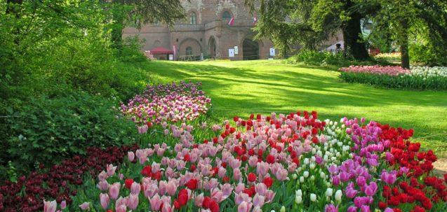 Messer Tulipano La magia dei tulipani nel castello di Pralormo