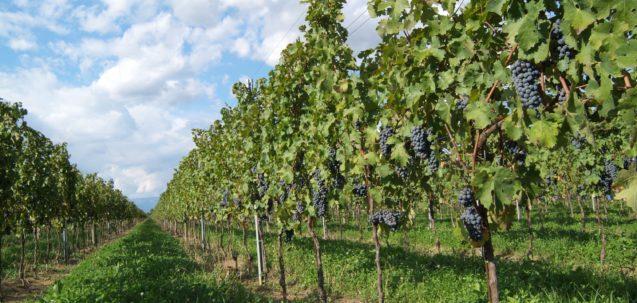 Il 6 e 7 maggio Asti celebra il vino biologico con Vinissage